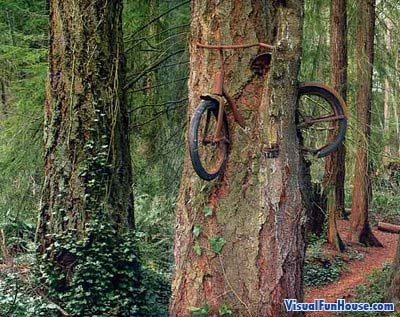 surrealismo_amazing_bike_tree_optical_illusion