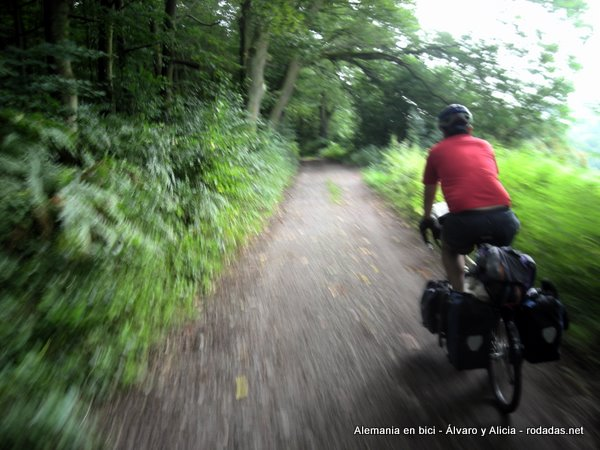 Carril bici por el bosque