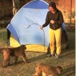 Acampada entre monos en la India