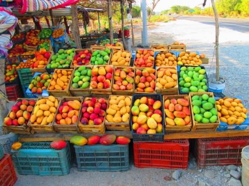 Variedades de mangos