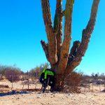 Cactus gigante en Baja